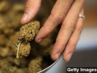 Does marijuana cut painkiller overdose deaths?