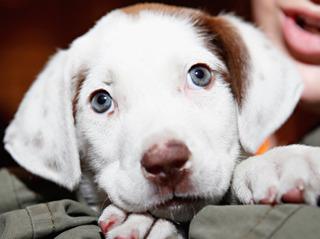Palm Beach Co. commissioners pass pet shop ban
