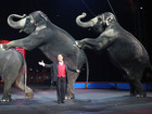 Watch Ringling elephants' final circus online