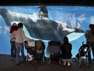 SeaWorld removing lifting floors from orca pools