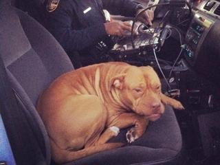 Florida dog hops into open police cruiser