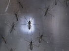 Hawaii signs emergency measure to fight Zika