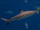 Shark attacks on the rise, say scientists