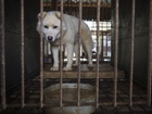 Dogs rescued from South Korean meat farm