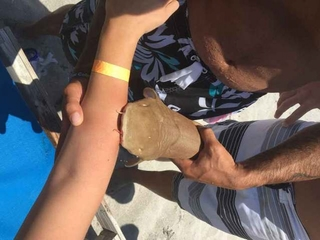 Florida No. 1 state for shark attacks in 2016