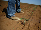 Farmers have highest suicide rate per profession