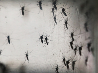 Health dept investiages Zika case in Lake Worth