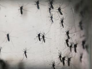 Zika spread through sex by man with no symptoms