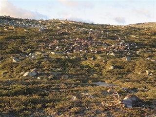 Strange lightning strike kills 323 reindeer