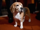 New law lets New Yorkers be buried with pets