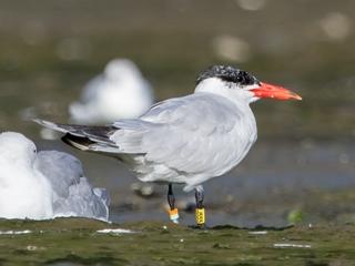 Birds change habitats, signaling climate change