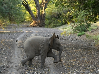 No one can agree on how to save elephants