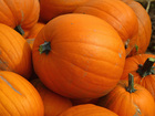 Nearly 200 pumpkins stolen from family farm