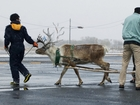 Domino's reindeer pizza delivery in Japan fails