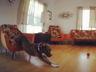 WATCH: Dog is not interested in getting up