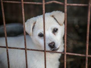 New bill would make euthanizing animals harder