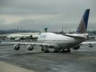 United Airlines investigates rabbit death
