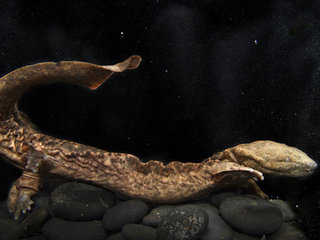 Bronx Zoo proudly displays 'snot otters'