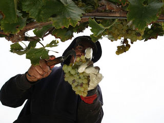 Research: White wine increases risk of rosacea
