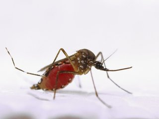 Scientists make major find about Zika mutations