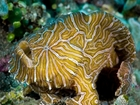 Sea life catalogue adds over 1,400 new species