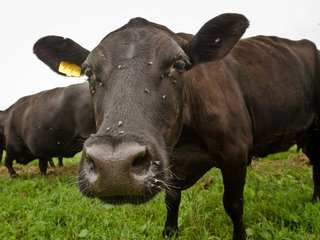 WHO: Use fewer antibiotics on healthy animals