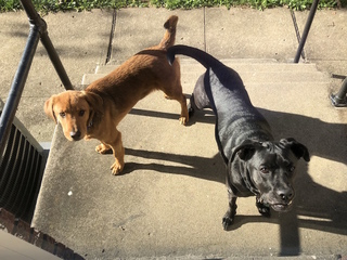 Study: Dog ownership has health benefits