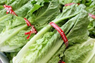 CDC: Throw out all romaine lettuce in your home