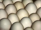 Millions of eggs in nine states recalled