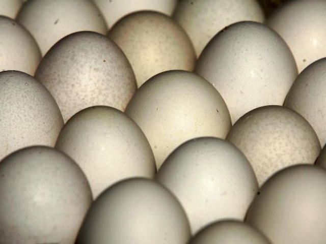 Salmonella outbreak linked to massive egg recall sickens almost three dozen people