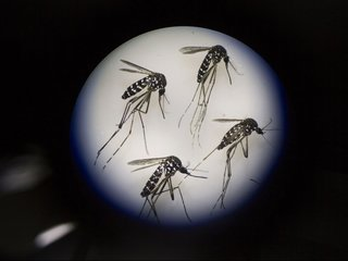 CDC: Mosquito, tick diseases tripled since 2004
