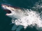 Proposed ban on shark fishing in Palm Beach Co.