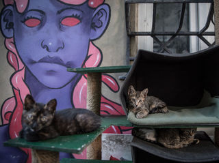 Photos: The place known as 'The City of Cats`