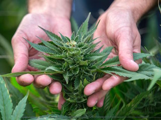 FDA approves first cannabis-based drug for US